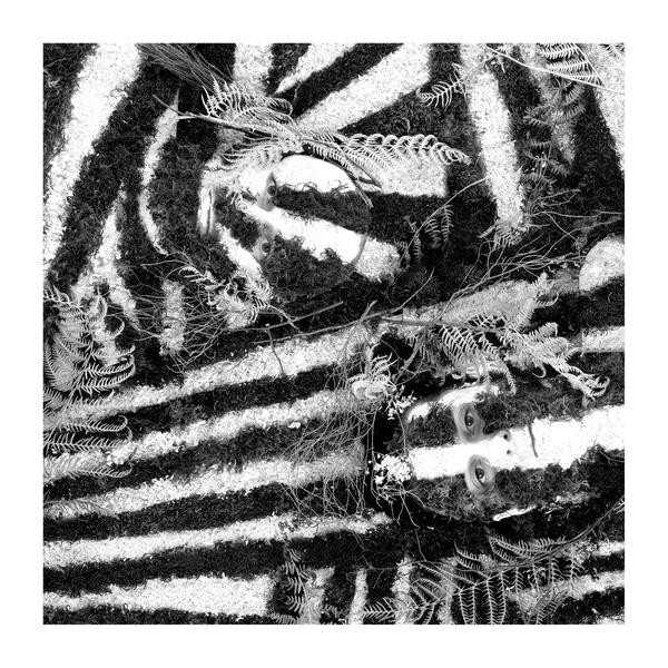 Album: Razzle Dazzle